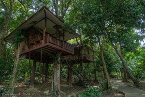 Baan Khao Sok Tree outside tree top
