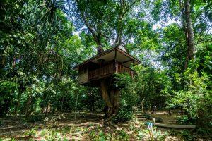 Baan Khao Sok Tree top outside