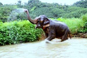 elephant trek tree house 2