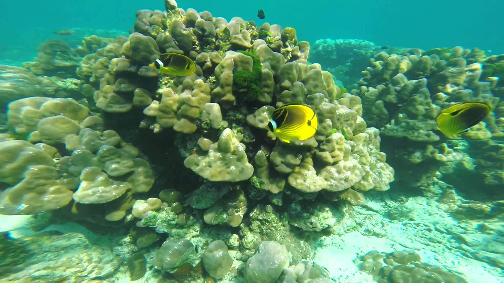 Séjour en couple à Koh Mook fish