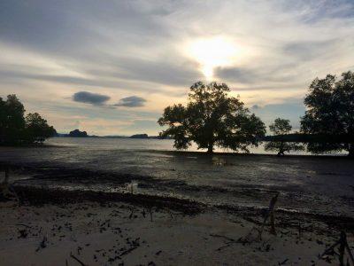 Amon Tour Klong Muang Thailande trees