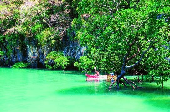 Demi journée kayak dans la mangrove de Thalane sea kayak