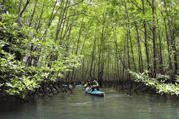 Demi journée kayak dans la foret de mangrove de Thalane