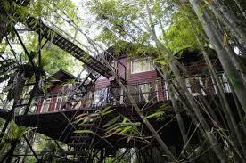KS tree house 2